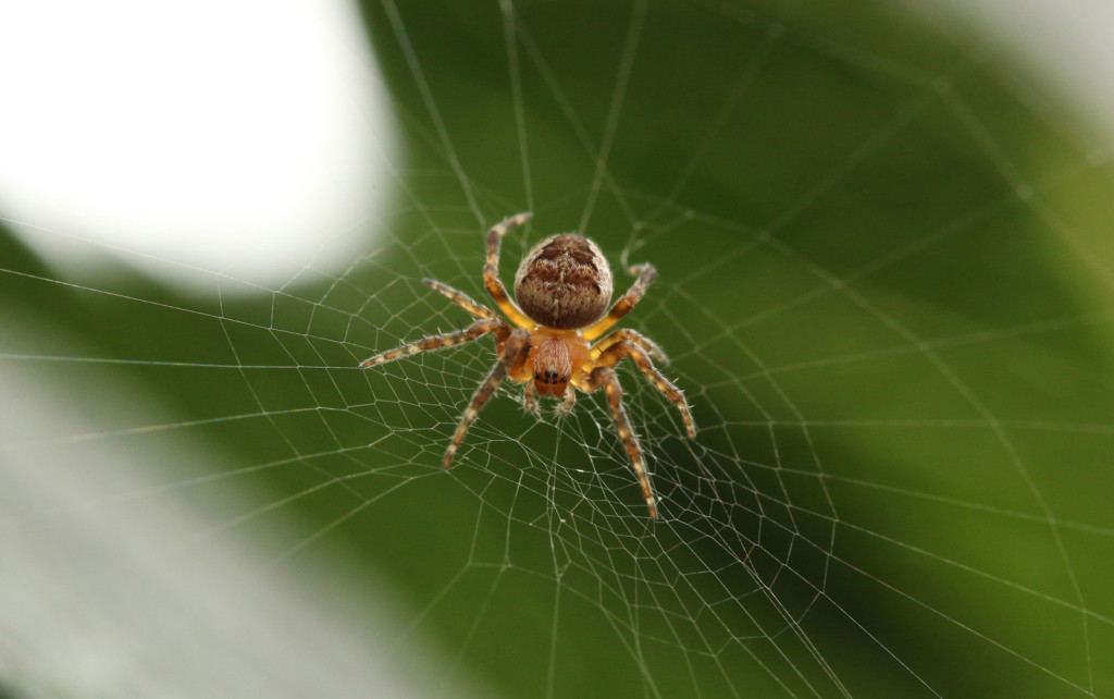 fear-of-spiders-smaller